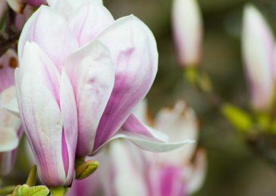 blossomlefthand