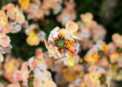 brilliantflower